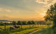 Cadastro Ambiental Rural: saiba o que é e por que é importante tê-lo!