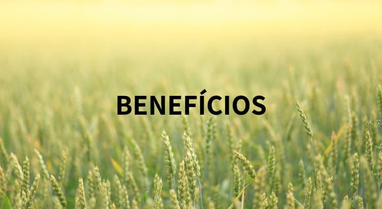 Contabilidade rural: benefícios